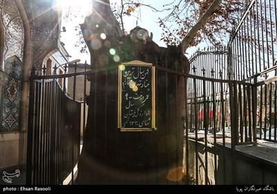 کهن سال ترین چنار تهران با عمر900 ساله
