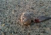 پرندگان شکاری در معرض انقراض از دست قاچاقچیان هرمزگانی رهایی یافتند