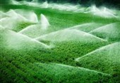 آثار خشکسالی در زمین های کشاورزی
