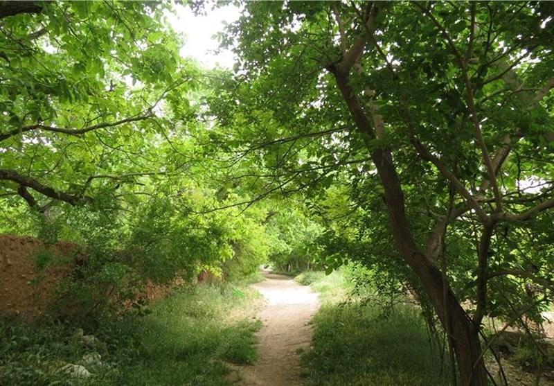 تنها یک سوم باغات شیراز باقی مانده است