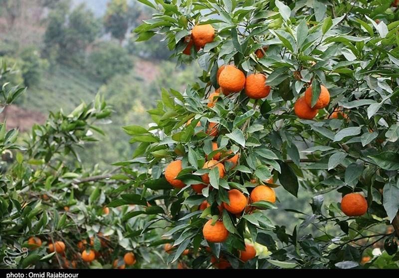 زمینه صادرات بیشتر محصولات باغی مازندران فراهم شود