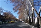 خشک شدن درختان مراغه براثر بی توجهی مسئولان