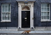 روباه پیر جلوی دفتر نخستوزیر انگلیس