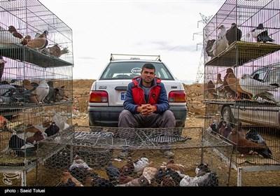 بازار خرید وفروش پرنده - بجنورد