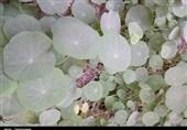 گردوخاک در خوزستان