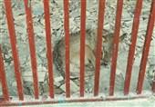 وضعیت رقتانگیز جانوران ارزشمند در باغ وحش تبریز + فیلم