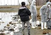 آخرین وضعیت ابتلاء انسانی به آنفلوآنزای پرندگان در ایران