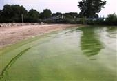 Phosphorus Pollution Reaching Dangerous Levels Worldwide