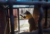گفتوگو با دامپزشک معالج توله خرس تصادفی گچسر