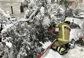 تصاویر/ درختان زیر برف ایستاده میمیرند