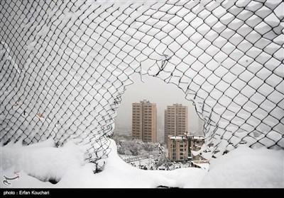 بارش برف در پایتخت