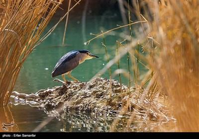İlkbahar Huzistan'da