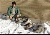 اراک| شکارچیان درنا در تالاب میقان اراک دستگیر شدند+تصاویر
