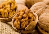 همدان|10 هزار اصله نهال گردوی اصلاح شده به باغ مادری و نهالستان گردوی تویسرکان منتقل میشود
