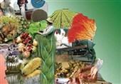 مرکزی  65 درصد از اعتبارات اشتغال روستایی زرندیه به بخش کشاورزی اختصاص یافت
