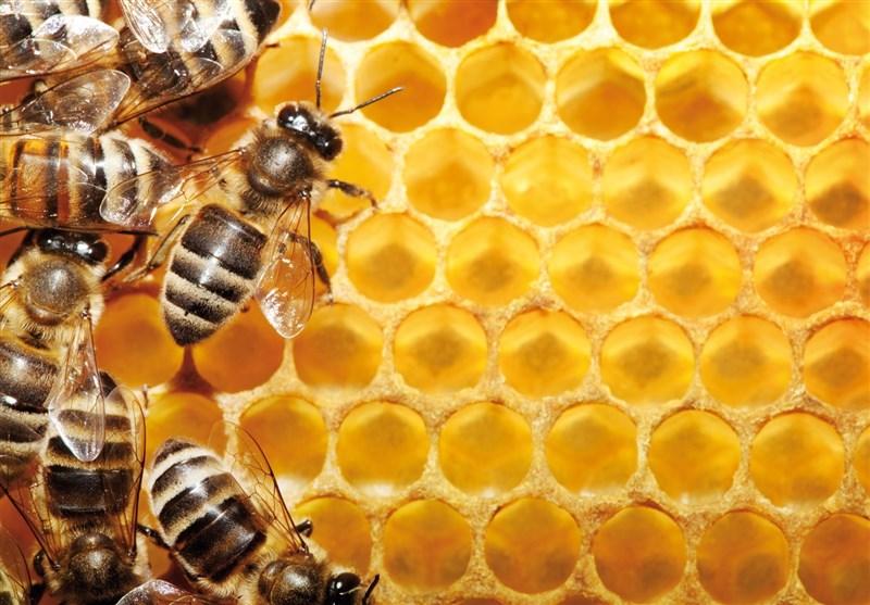 عسل طبیعی و زنبور عسل