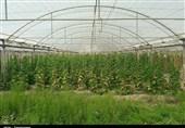 مشهد  سیستمهای هوشمند گلخانهای در ایران وجود ندارد