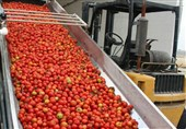 8 طرح بزرگ صنایع تبدیلی کشاورزی در جنوب استان کرمان اجرا میشود
