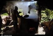 برداشت نیشکر در روستای ریکنده قائمشهر