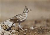 مجوز شکار پرندگان در کرمان تا پایان آذرماه تمدید شد