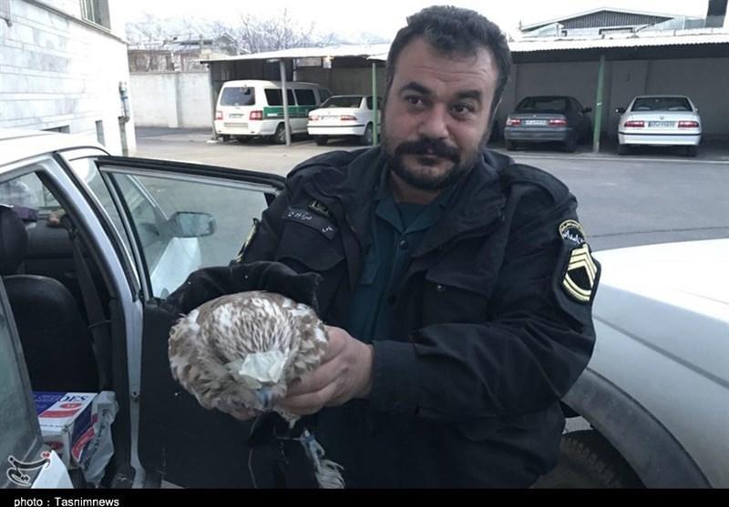 مرکزی| شکارچیان غیرمجاز در استان مرکزی دستگیر شدند + تصاویر
