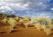 یک میلیون و 700 هزار اصله نهال مرتعی در گلستان تولید شد/ مراتع خصوصی در استان ایجاد میشود