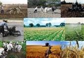 جزئیات جدید از تسهیلات اشتغال روستایی/ تقاضای تسهیلات 16 برابر منابع