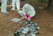 آنفلوانزا و نیوکاسل، سوغات قاچاقچیان پرندگان شکاری برای کشورهای اطراف