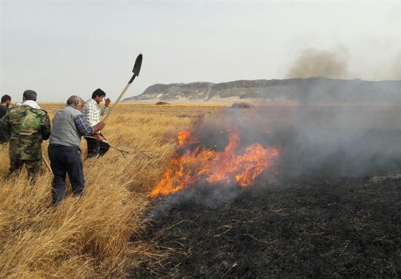 مهار آتشسوزی تالاب هامون/ عامل انسانی علت حریق بود