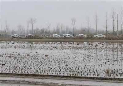 عملیات ضربتی محیط زیست مازندارن و جمع آوری 300 رشته دام هوایی