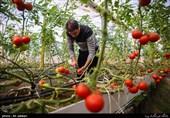 «کشاورزی»، ناجی اقتصاد| 270 هزار هکتار زمین در ایران مستعد احداث گلخانه با اشتغالزایی 2.7 میلیون نفری