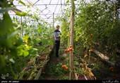 حمایت از سرمایهگذاران چینی برای احداث گلخانه در اردبیل