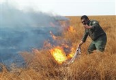 زاهدان| عامل انسانی موجب آتش گرفتن بستر تالاب هامون شد