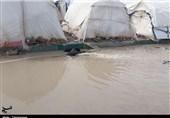 کرمانشاه| گلایه خانواده زلزلهزده از وضعیت زندگی؛ تنها یک نقطه چادر خشک است + فیلم