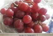 جمع آوری شبانه میوههای قاچاق میدان مرکزی میوه تهران+تصاویر