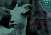 آثار راه یافته به بخش رقابتی «کوتاهِ کوتاه» جشنواره فیلم گلوب 2018 معرفی شدند