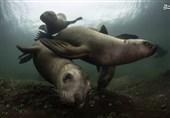 عکس|محل زندگی شیرهای دریایی