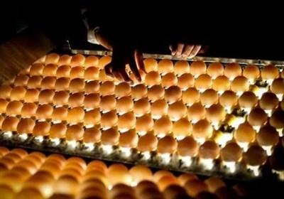 هشدار اتحادیه پرنده و ماهی در مورد صعود دوباره قیمت تخم مرغ