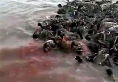 حمام خون در آبگیرهای دشت آزادگان + فیلم
