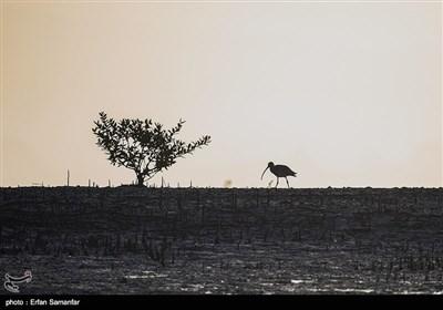 پرندگان خلیج فارس