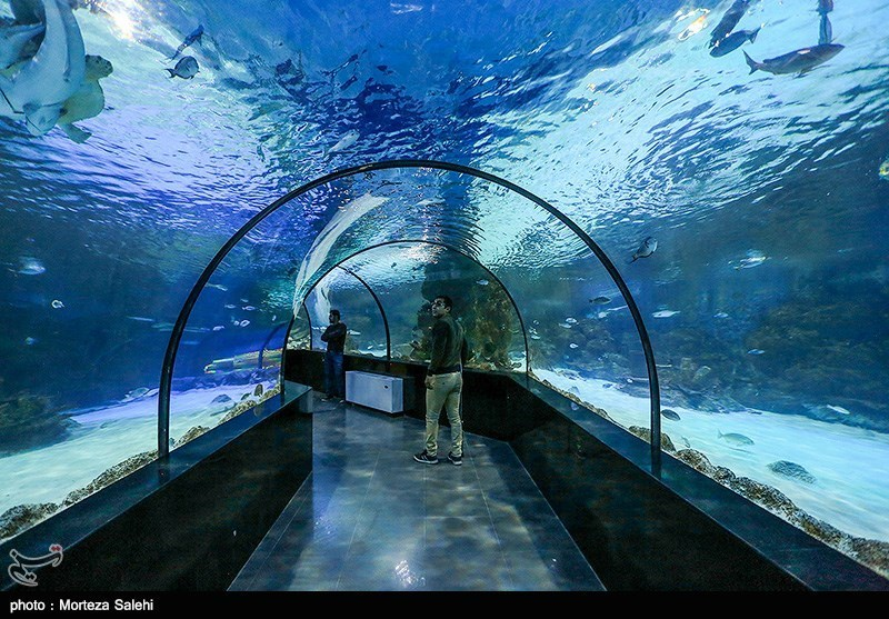 Isfahan Aquarium, Enjoyment of Observing Oceans in Historic City