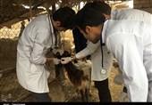 15 درصد اعضای نظام دامپزشکی فارس بیکار هستند