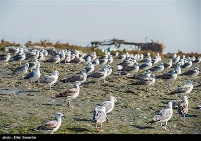 خلیج فارس کے پرندے