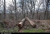 مختاری: با پول جرایم قطع درختان، در تهران باغ میخریم
