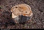 90 درصد حریق جنگلها عامل انسانی دارد؛ قطع درخت به هر نیتی جرم محسوب میشود