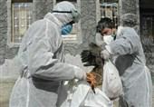 پیشبینی ملاحظات زیست محیطی در تدوین سند اجرایی کنترل بیماری آنفلوآنزای پرندگان