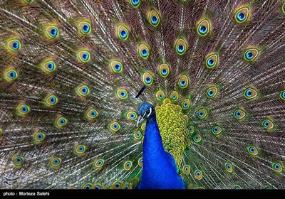 باغ پرندگان - اصفهان