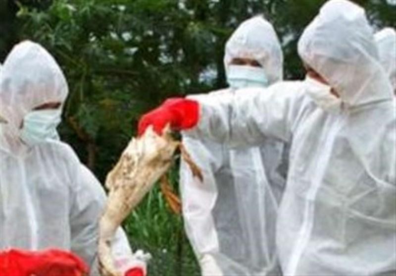 ایران از لیست کشورهای دارای آنفلوآنزای فوق حاد پرندگان خارج شد