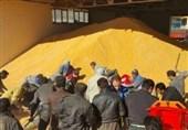 توزیع گسترده برنج، روغن و تخممرغ با قیمت مصوب/ 7.5 میلیون تن ذرت وارد شد