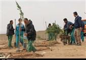 مرکزی  درختکاری در سرزمین یاقوتهای سرخ؛ سرانه فضای سبز ساوه استاندارد نیست